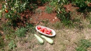 holiday home kornelija - green garden